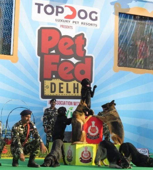 Mela of Tail wagging animals – PET FED 2018